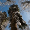 Guitar & Forest - 01/2012 - Prales Salajka