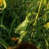 A&A - Červenec - Vsetínské louky