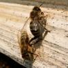 A&A - Květen - Rodinné včelařství Urban