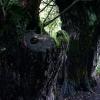 G&F - červenec - Jevišovské vrby