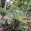 G&F - srpen - Ratajský les