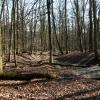 Guitar & Forest - 02/2012 - Litovelské Pomoraví
