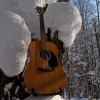 Guitar & Forest - January 2012