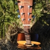 Guitar & Forest - March 2012