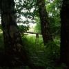 Guitar & Forest - June 2012