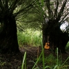 Guitar & Forest - July 2012