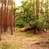 Guitar & Forest - May 2012