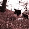 Míček hlídá kotě...